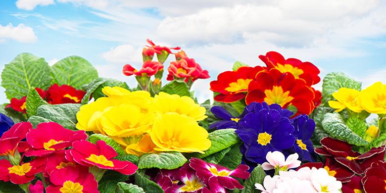 באביב העולם כולו מתחדש